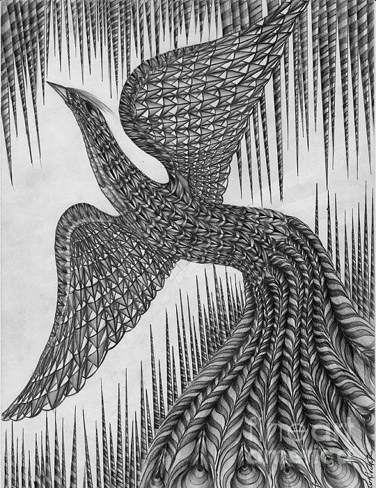 Peacock Drawing - Peacock by Anca S