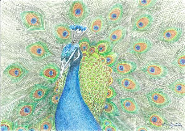 how to draw and colour peacock