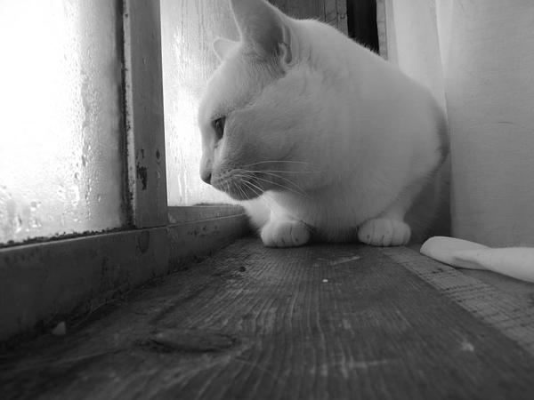 White Photograph - Pensive Snobi by James Rishel