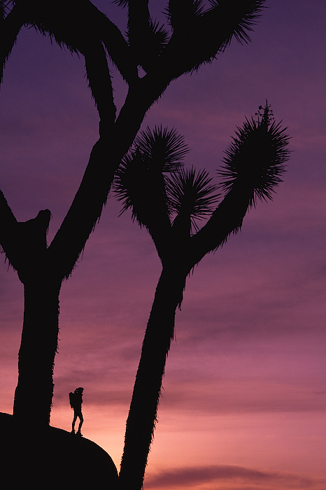 Person On Rock Formation With Joshua Trees Photograph by Comstock Images