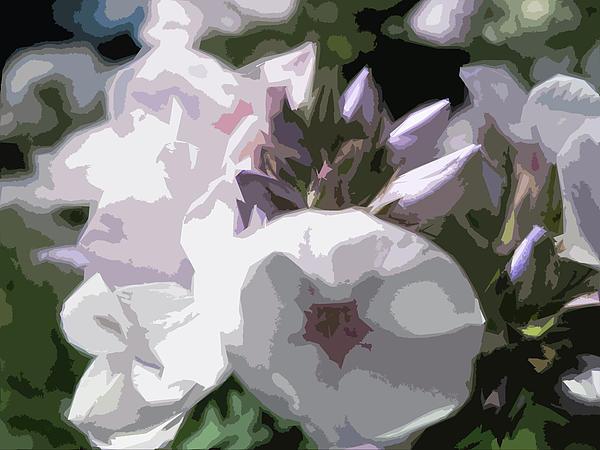 Phlox Digital Art - Phlox by Bitten Kari