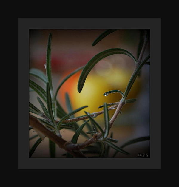Nature Photograph - Photo For Your Soul... by Marija Djedovic