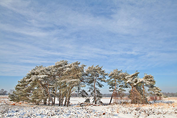 Blue Photograph - Pine Trees At Edge Of Frozen Lake by Dirk Ercken