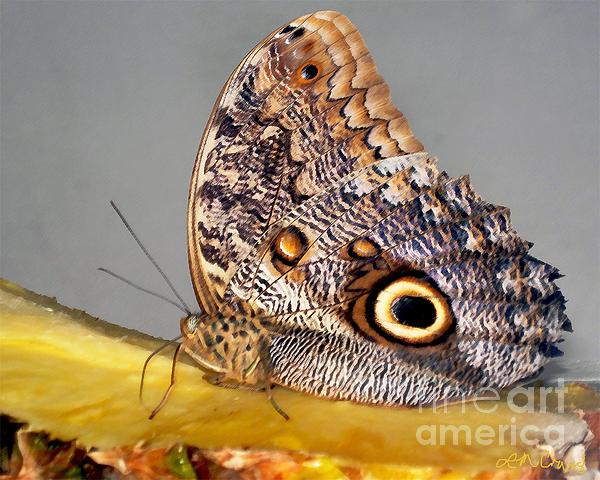 Beautiful Photograph - Pineapple Butterfly by Leslie Cruz