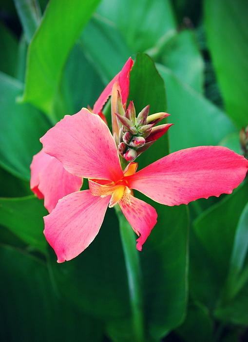 Hot Pink Flowers Photograph - Pink Bloom by Cathie Tyler
