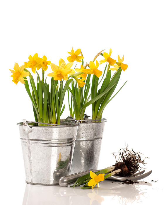 Spring Photograph - Planting Bulbs by Amanda Elwell