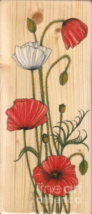 Illustration Drawing - Poppies On Wood by Snezana Kragulj
