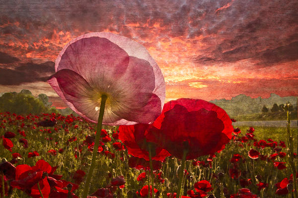 Appalachia Photograph - Poppy Sunrise by Debra and Dave Vanderlaan