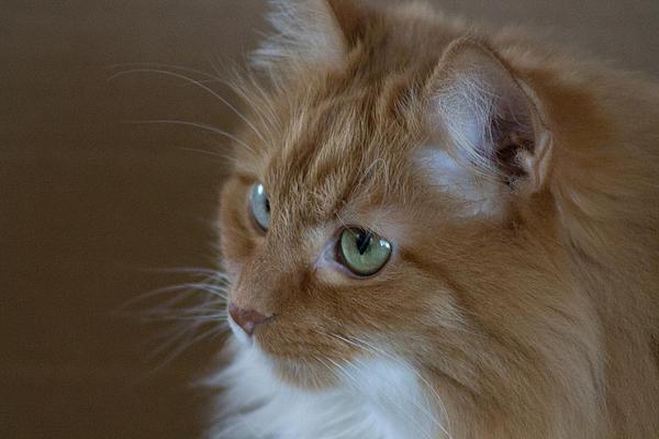 Cat Photograph - Pretty Girl by Rhonda Humphreys
