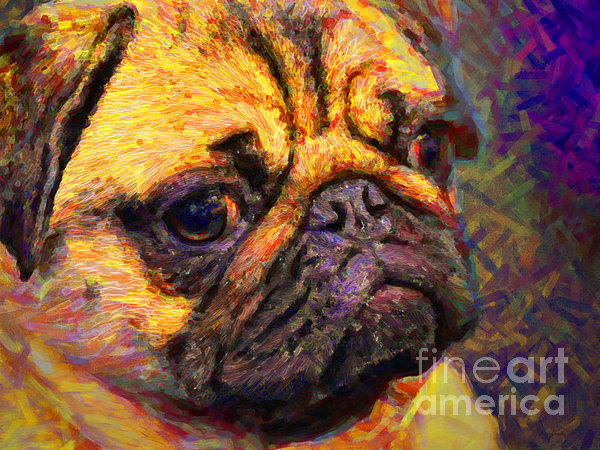 Animal Photograph - Pug 20130126v1 by Wingsdomain Art and Photography
