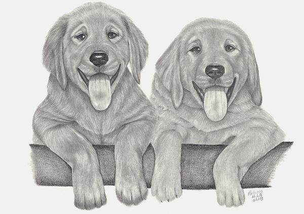 Puppies Drawing - Puppy Love by Patricia Hiltz