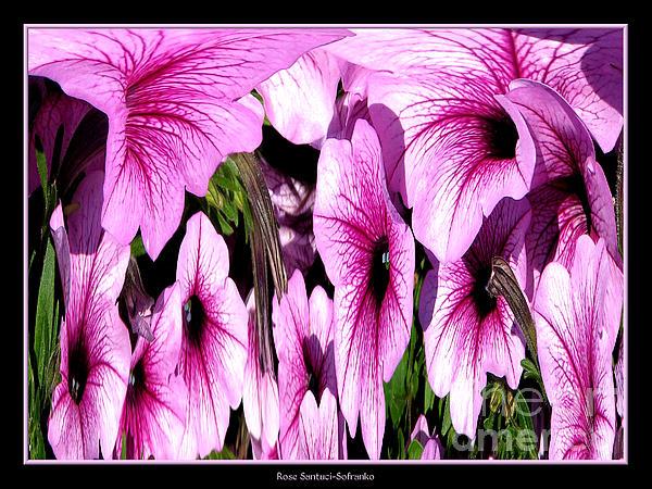 Petunia Photograph - Purple Petunias Abstract by Rose Santuci-Sofranko