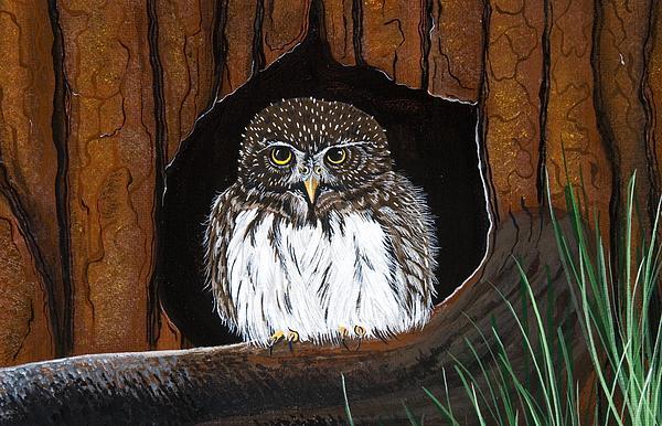 Owl Painting - Pygmy Owl by Jennifer Lake