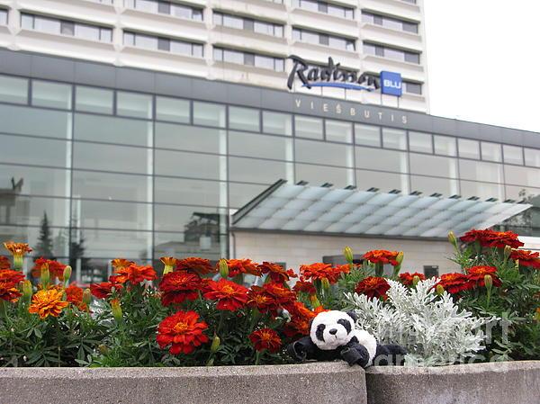 Hotel Photograph - Radisson Blu Lietuva. Baby Panda Likes It by Ausra Huntington nee Paulauskaite