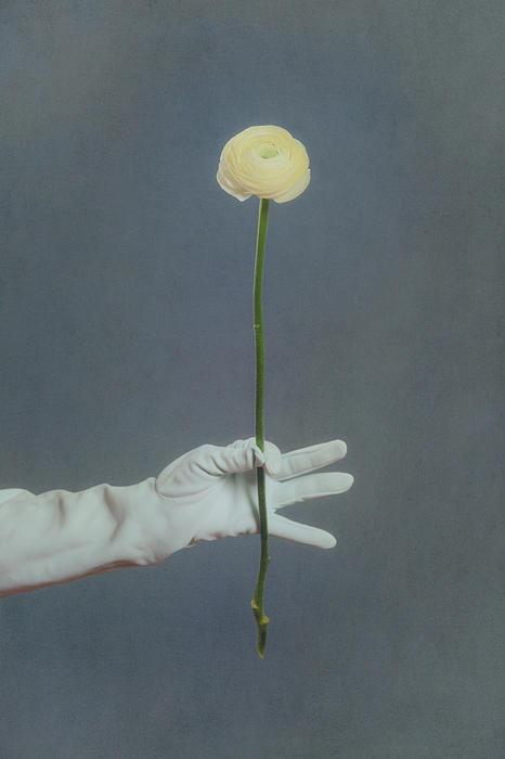 Flower Photograph - Ranunculus by Joana Kruse