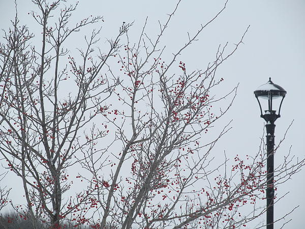 Cherry Photograph - Red Berries And Lamppost by Tina M Wenger