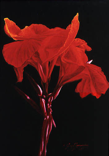 Floral Painting - Red Canna by Gary  Hernandez