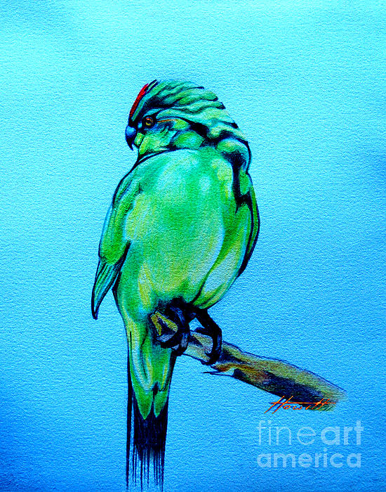 Bird Drawing - Red Crowned Parakeet by Patricia Howitt