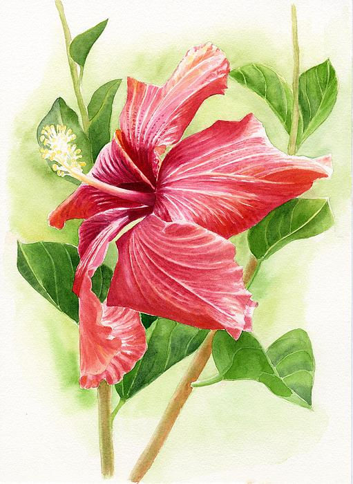 Red Painting - Red Orange Hibiscus by Sharon Freeman