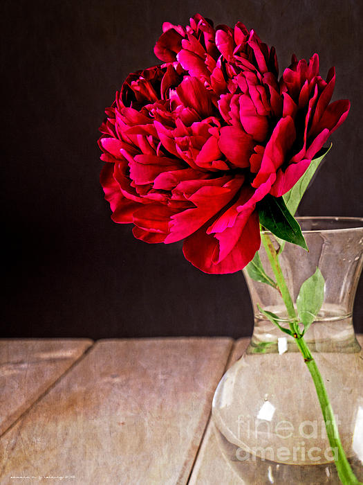 Vase Photograph - Red Peony Flower Vase by Edward Fielding
