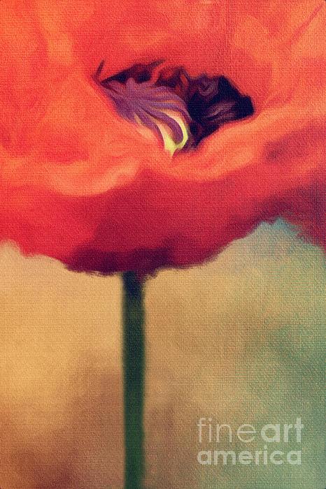Poppy Digital Art - Red Poppy by Rosie Nixon
