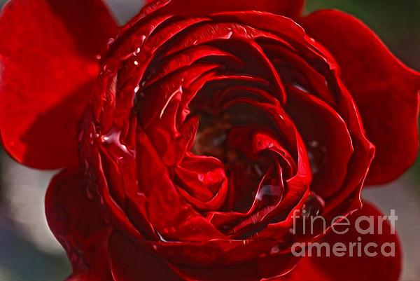 Red Rose Digital Art - Red Rose by Nur Roy