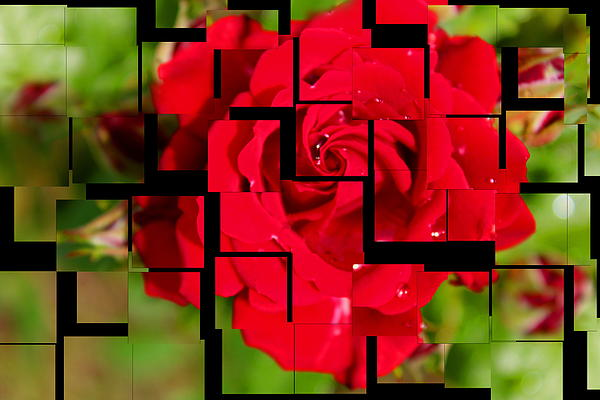 Water Drops Photograph - Red Rose Puzzle by Julia Fine Art And Photography