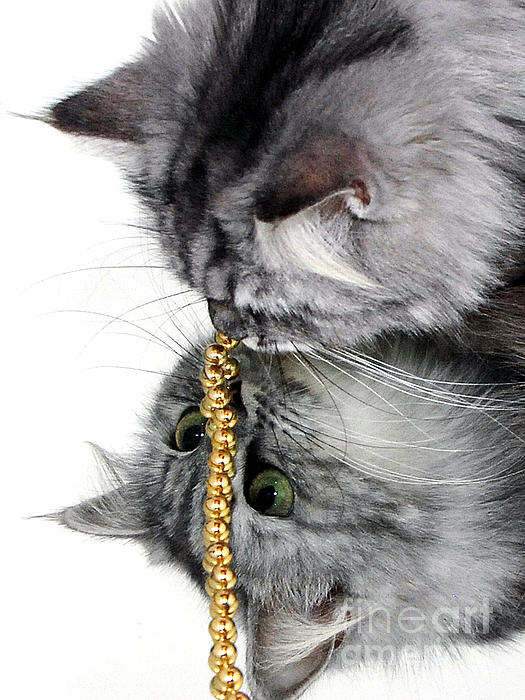 Cat's Eyes Photograph - Reflective Curiosity by Graham Taylor