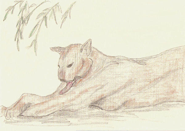 Panther Drawing - Relaxing Panther by Rosalie Scanlon