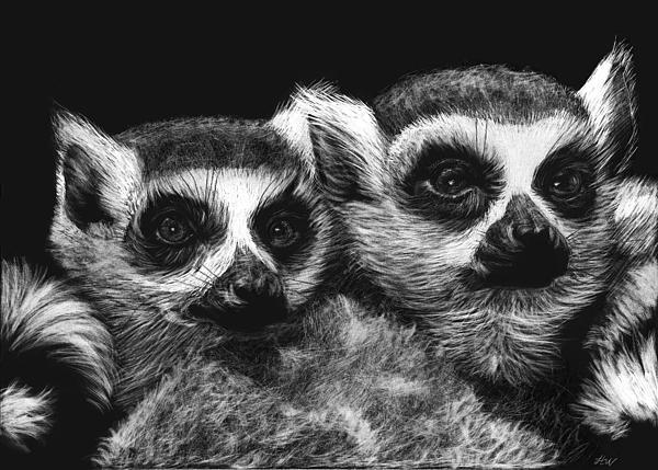 Lemur Drawing - Ringtail Lemurs by Heather Ward