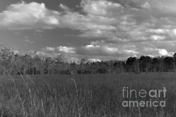 Sawgrass Photograph - River Of Grass by Andres LaBrada