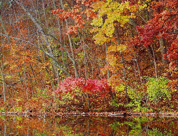 Fall Photograph - Riverbank Beauty by James Hammen