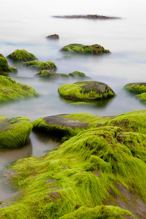Abstract Photograph - Rocks Or Boulders Covered With Green Seaweed Bading In Misty Sea  by Dirk Ercken