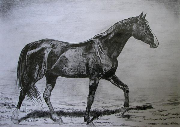 Horse Drawing - Roko by Melita Safran