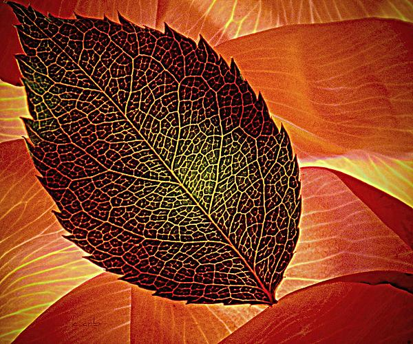 Earthy Photograph - Rose Foliage On Rose Petals by Chris Berry