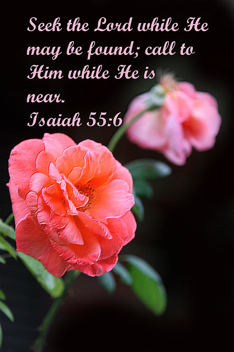 Scripture Photograph - Rose With Echo Is. 55v6 by Linda Phelps