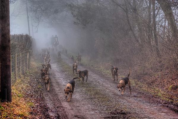 Fox Hunt Photograph - Ross Harriers Hunt by Steve Lindon