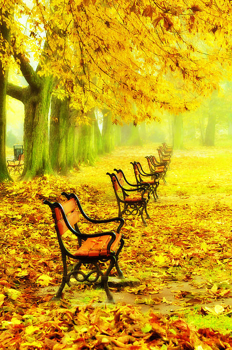 Alley Photograph - Row Of Red Benches In The Park by Jaroslaw Grudzinski