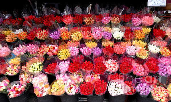 A Lot Photograph - Rows Of Roses by Amy Cicconi