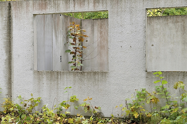 Ruins Of A Building, Prefabricated Concrete Unit Of A House, Recaptured By Nature, Mecklenburg-western Pomerania, Germany Photograph by Frederik