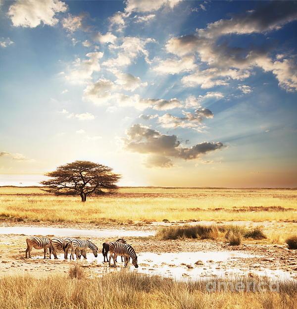 Safari Photograph - Safari by Boon Mee
