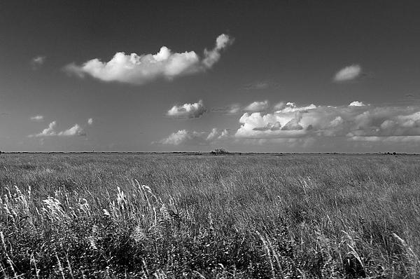 Landscape Photograph - Sawgrass Prairie  by Andres LaBrada