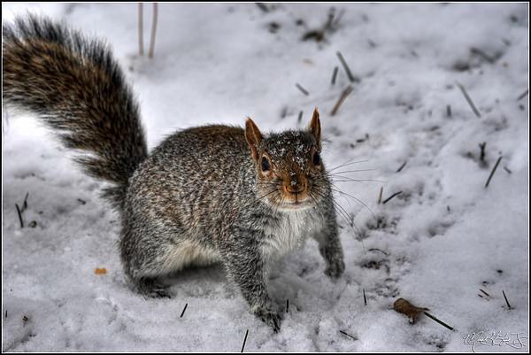 Snow Photograph - Say Whaaaaaaat by Michael Frank Jr