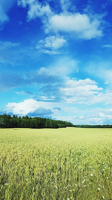 Scenic View Of Field Against Cloudy Sky Photograph by Jonas Rask / EyeEm