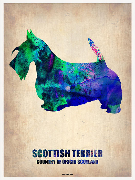 Scottish Terrier Painting - Scottish Terrier Poster by Naxart Studio