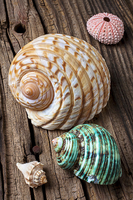 Sea Shell Photograph - Sea Shells With Urchin  by Garry Gay