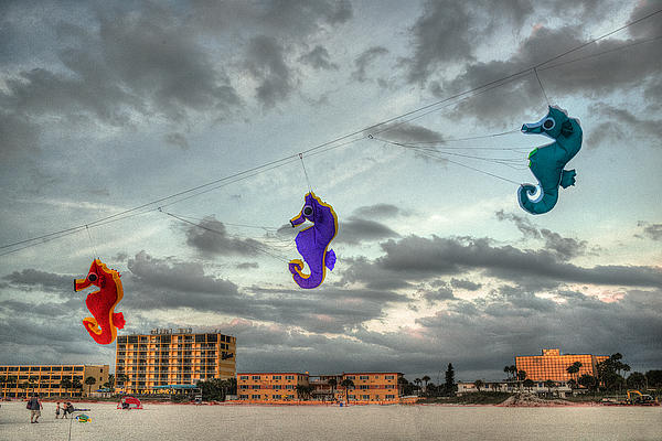 Kites Photograph - Seahorse Dance by William Fields