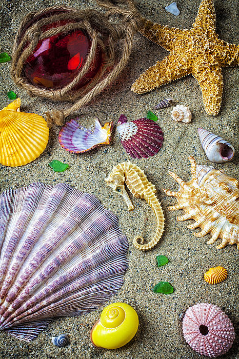 Seahorse Starfish Photograph - Seahorse With Many Sea Shells by Garry Gay