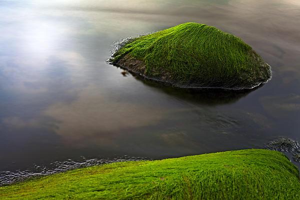 Algae Photograph - Seascape Seaweed On Rocks by Dirk Ercken