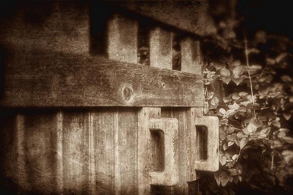Art Photograph - Secluded Garden by Tom Mc Nemar